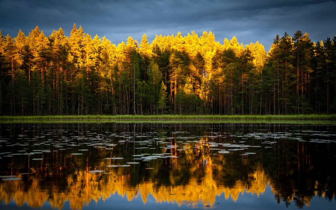 La nature apaise, la nature régénère !
