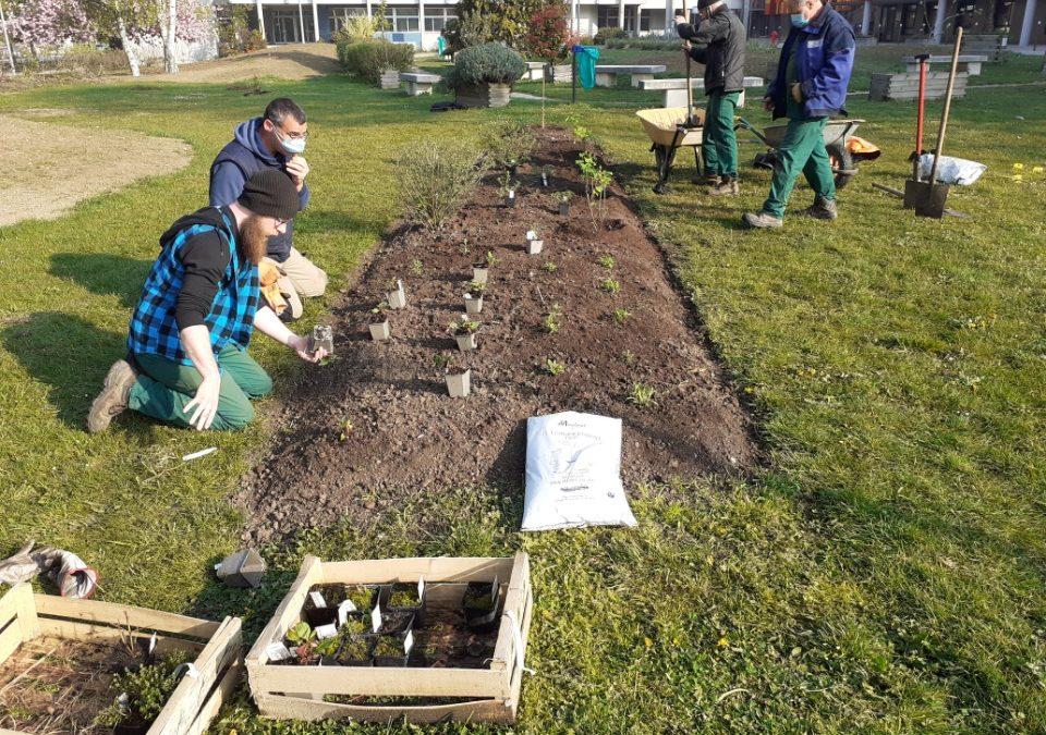 Un jardin pour les Soignants du CHI d'Aulnay-sous-Bois (93) !